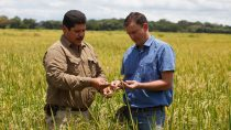 抗性杂草是全球水稻种植者一直以来面临的共同挑战,Provisia™水稻系统将成为种植户防治杂草入侵的全新工具.