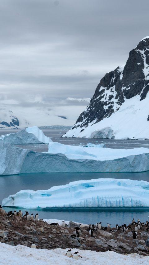 BASF_Corpus_Antarctica_photo-1551005916-2cdeb025959f.jpeg
