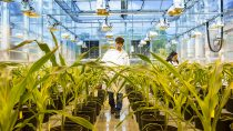 Plant biotechnology research in the greenhouse, Research Triangle Park, North America