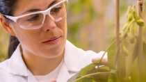 Plant biotechnology research in the greenhouse, Research Triangle Park, North America / Pflanzenbiotechnologische Forschung im Gewächshaus, Research Triangle Park, Nordamerika