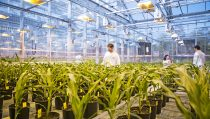 Plant biotechnology research in the greenhouse, Research Triangl