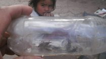 Insects in a bottle