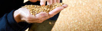 """Auf dem englischen Hof """"The Grange"""" kombiniert Landwirt Andrew Pitts modernen Nahrungsmittelanbau mit dem Schutz der Artenvielfalt. Der landwirtschaftliche Betrieb ist Teil des europäischen Farm Network, einer von BASF initiierten Partnerschaft. Landwirte, Agrar- und Naturschutzexperten teilen ihr Wissen, entwickeln Maßnahmen für eine optimale nachhaltige Landwirtschaft und testen diese fortwährend.Andrew Pitts prüft die Qualität und Quantität des Ertrags, denn nur durch Profitabilität ist eine nachhaltige Produktion möglich."""
