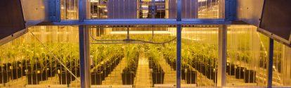 Gewächshaus des Forschungsstandortes von Agricultural Solutions, Research Triangle Park, Nordamerika