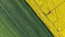 Luftbilder sind die Basis für die detaillierte Beurteilung landwirtschaftlicher Felder. Eine innovative Technologieplattform von Hummingbird Technologies nutzt eigens programmierte Algorithmen, die durch Luftbilder von Satelliten, Flugzeugen und unbemannten Luftfahrzeugen gesteuert werden. Mit den Bilddaten können präzise Erntevorhersagen oder akkurate Berechnungen zum Düngemittelbedarf erstellt werden. BASF Venture Capital und die kanadische TELUS Ventures gehören zu den Hauptinvestoren der Series-B-Investmentrunde in das britische Startup, das weltweit führend auf dem Gebiet fortschrittlicher Ernte-Analyse ist. Copyright: ThinkstockPhotos