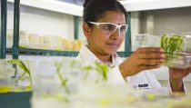 Plant biotechnology research in the transformation lab, Research Triangle Park, North America