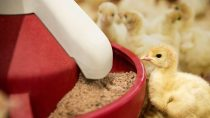 BASF will be showcasing its comprehensive portfolio of products India Poultry Expo.