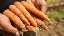 BASFはバイエルの野菜種子事業の買収についてバイエルと独占的に協議しています。この取引により、BASFは将来的に種子事業と農業関連製品における市場地位を強化します。