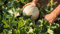 BASF、バイエルの野菜種子事業の買収を完了①