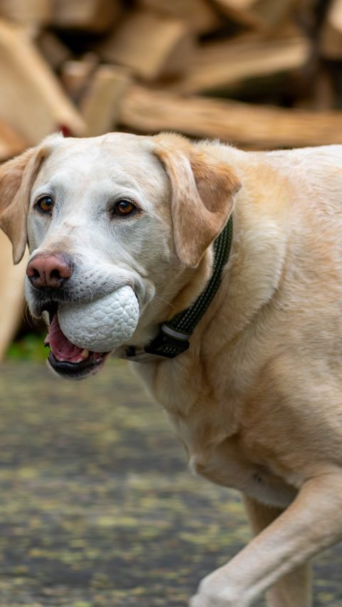 Plymouth Foam is launching its new line of dog toys under their AIREHIDE brand which uses BASF's Infinergy material.