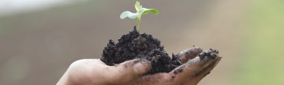 A baby seedling sprouts from the earth in the palm of a hand.